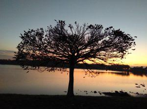 Hajnali ablakon bámulás