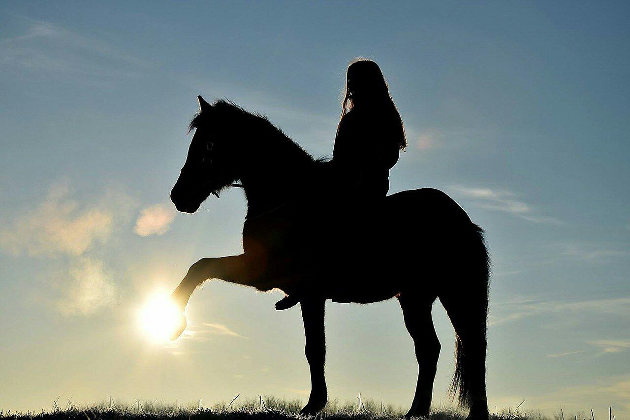 horse-3586284_1280-1311873278.jpg