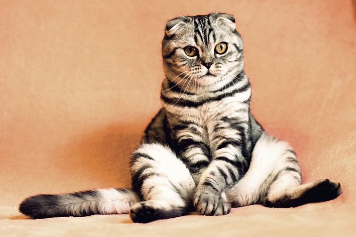 cat-2934720__480