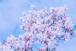 Csak egy sóhaj… Lesz-e tavasz idén?