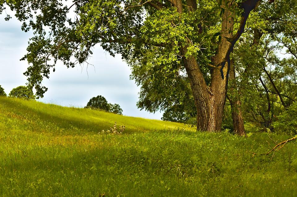 tree-4298471_960_720 alt